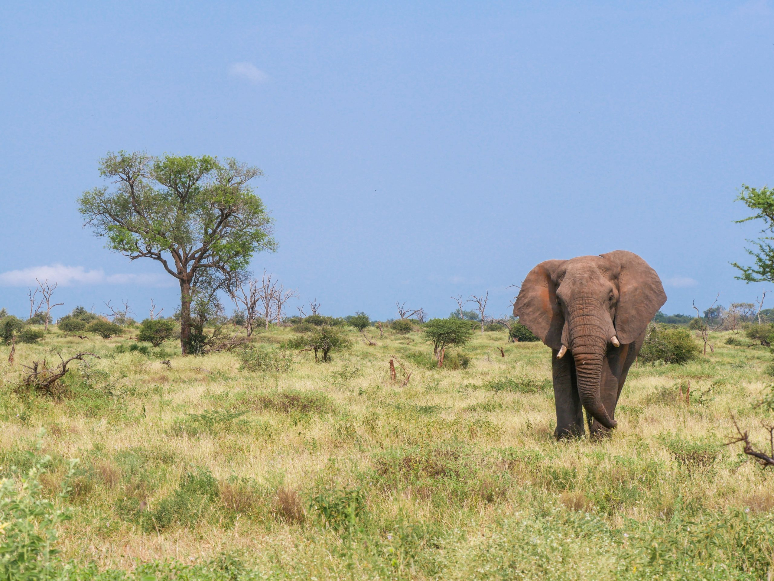 Elephant-safaris-circuit-expedition-engagee